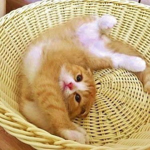 kitten stretching